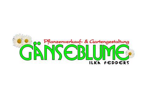 Gänseblume -Ilka Fedders Pflanzenhof Garten- u. Landschaftsbau